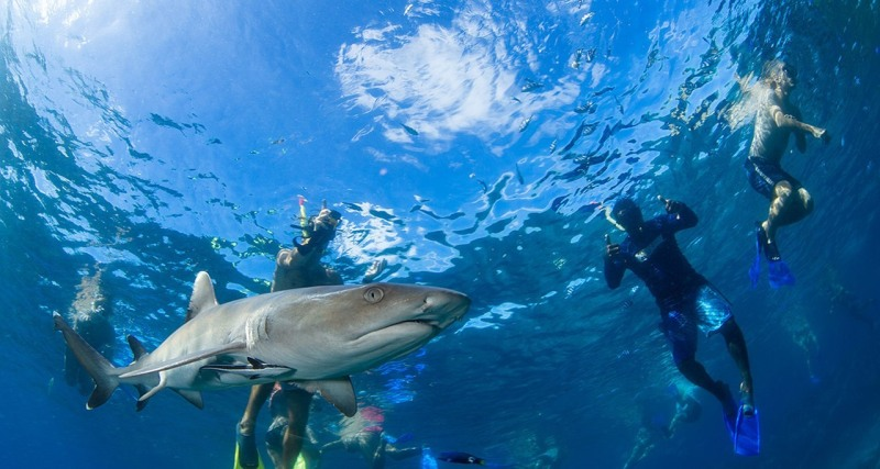AWE-shark-dive-fiji2-800