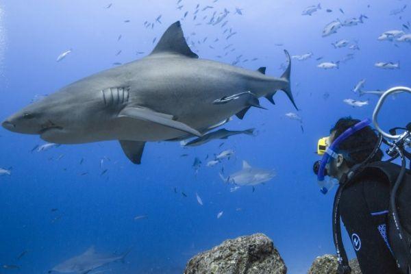 tv-shark-80088D67E73-AB61-C2FE-8041-464F560EAF2C.jpg